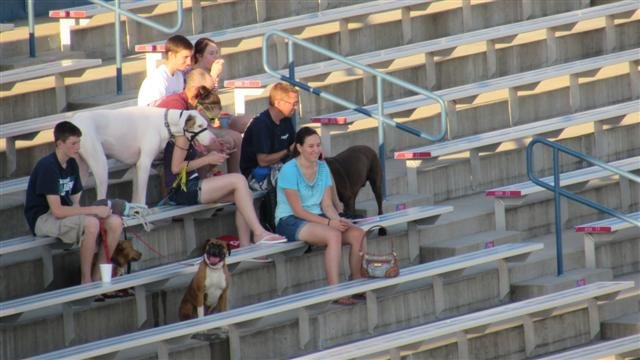 The Spokane Indians hosted a Bark in the Park night for local dogs to enjoy some baseball with their humans.